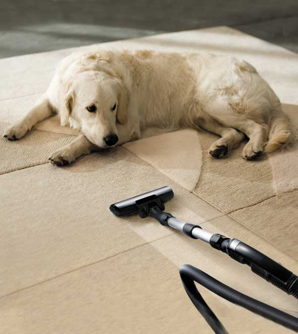 pet odor carpet